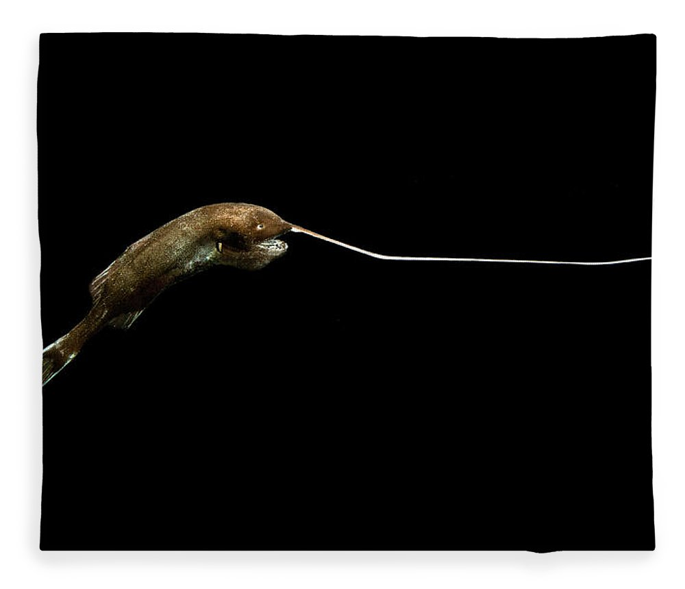 Whipnose Anglerfish Fleece Blanket featuring the photograph Whipnose Anglerfish Gigantactis by Dant� Fenolio