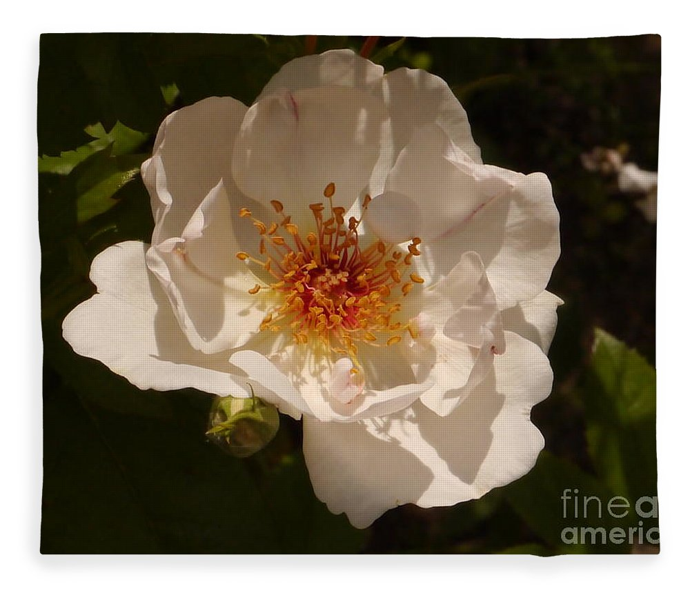 White Rose Fleece Blanket featuring the photograph White Rose by Christiane Schulze Art And Photography