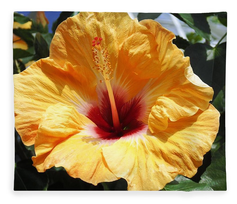 Floral Fleece Blanket featuring the photograph Yellow Hibiscus by Karin Dawn Kelshall- Best