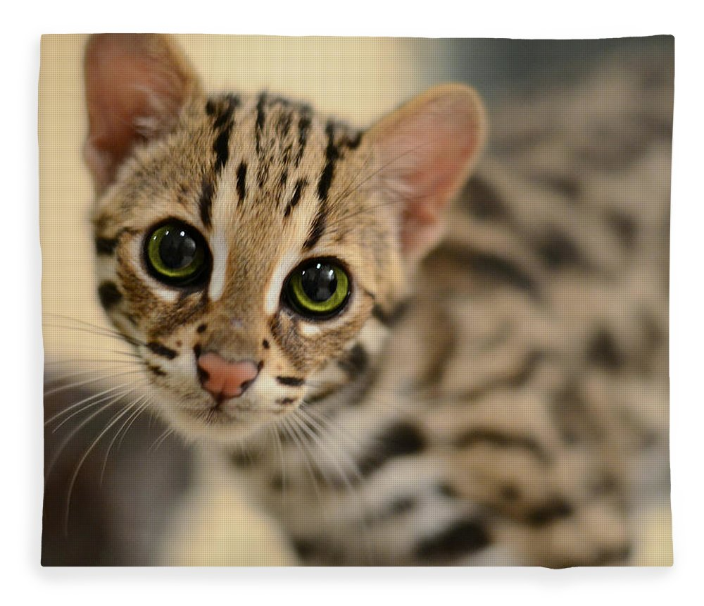 Animals Fleece Blanket featuring the photograph Asian Leopard Cub by Laura Fasulo
