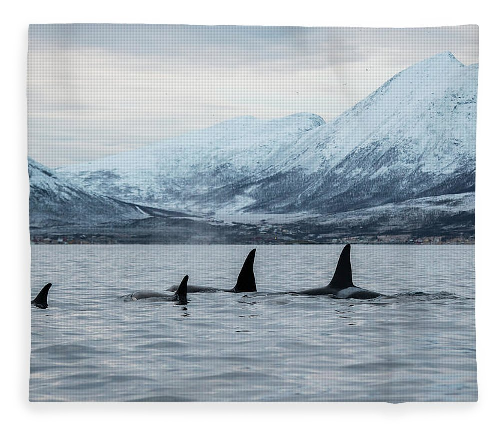 Snow Fleece Blanket featuring the photograph 2 Big 2 Small by By Wildestanimal