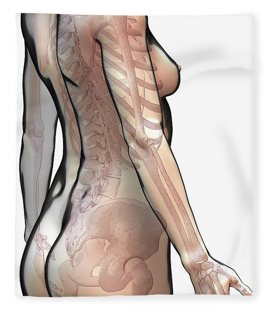Digitally Generated Image Fleece Blanket featuring the photograph Bones Of The Upper Body Female by Science Picture Co