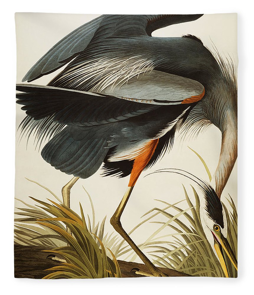 Great Blue Heron Fleece Blanket featuring the painting Great Blue Heron by John James Audubon