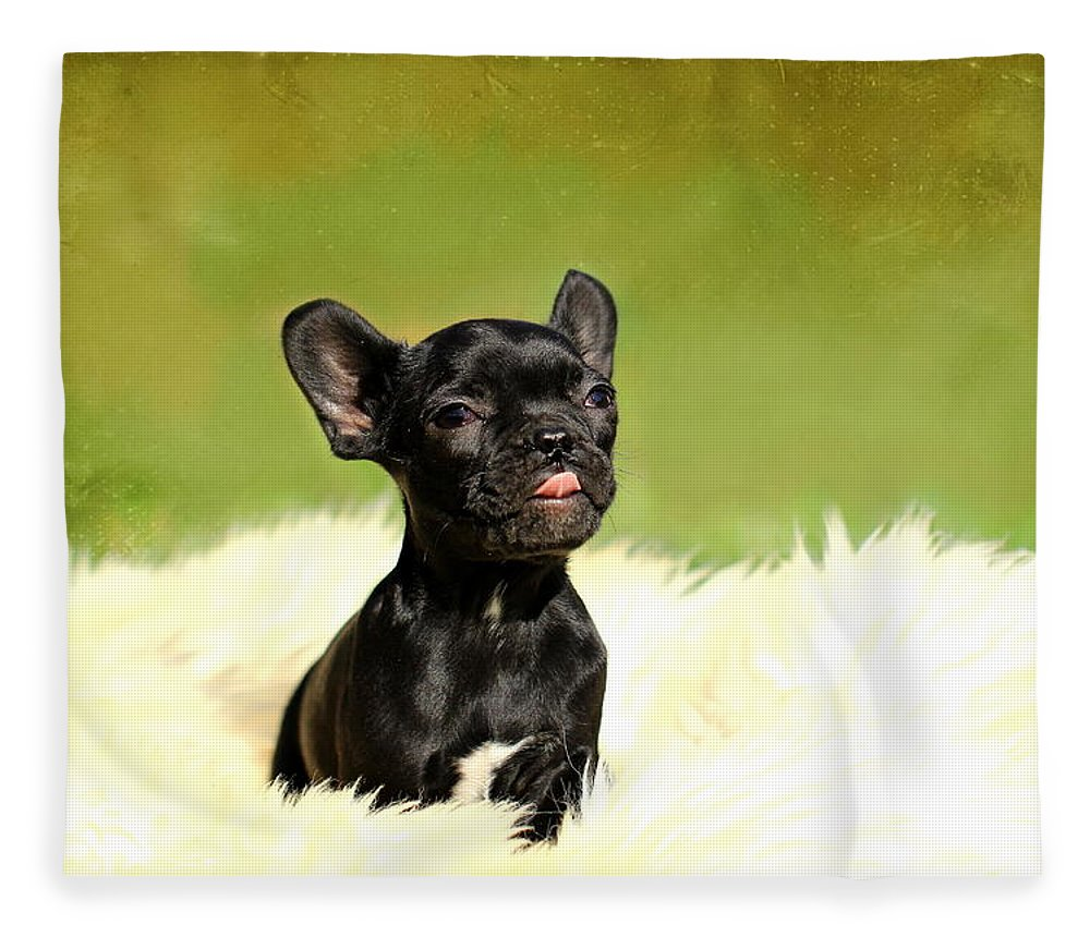 French Bulldogs Fleece Blanket featuring the photograph Puppies by Heike Hultsch