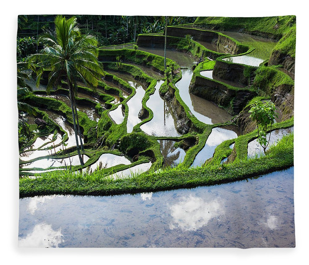 Tranquility Fleece Blanket featuring the photograph Rice Terraces In Central Bali Indonesia by Gavriel Jecan