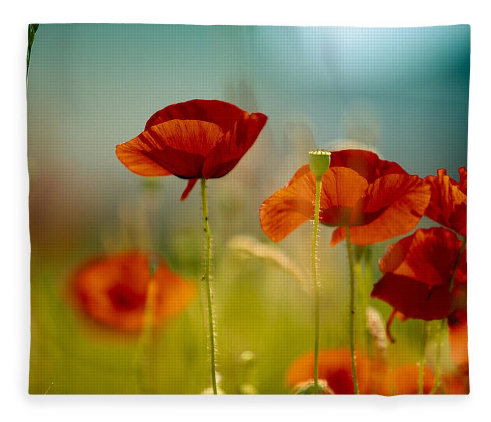 Poppy Fleece Blanket featuring the photograph Summer Poppy by Nailia Schwarz