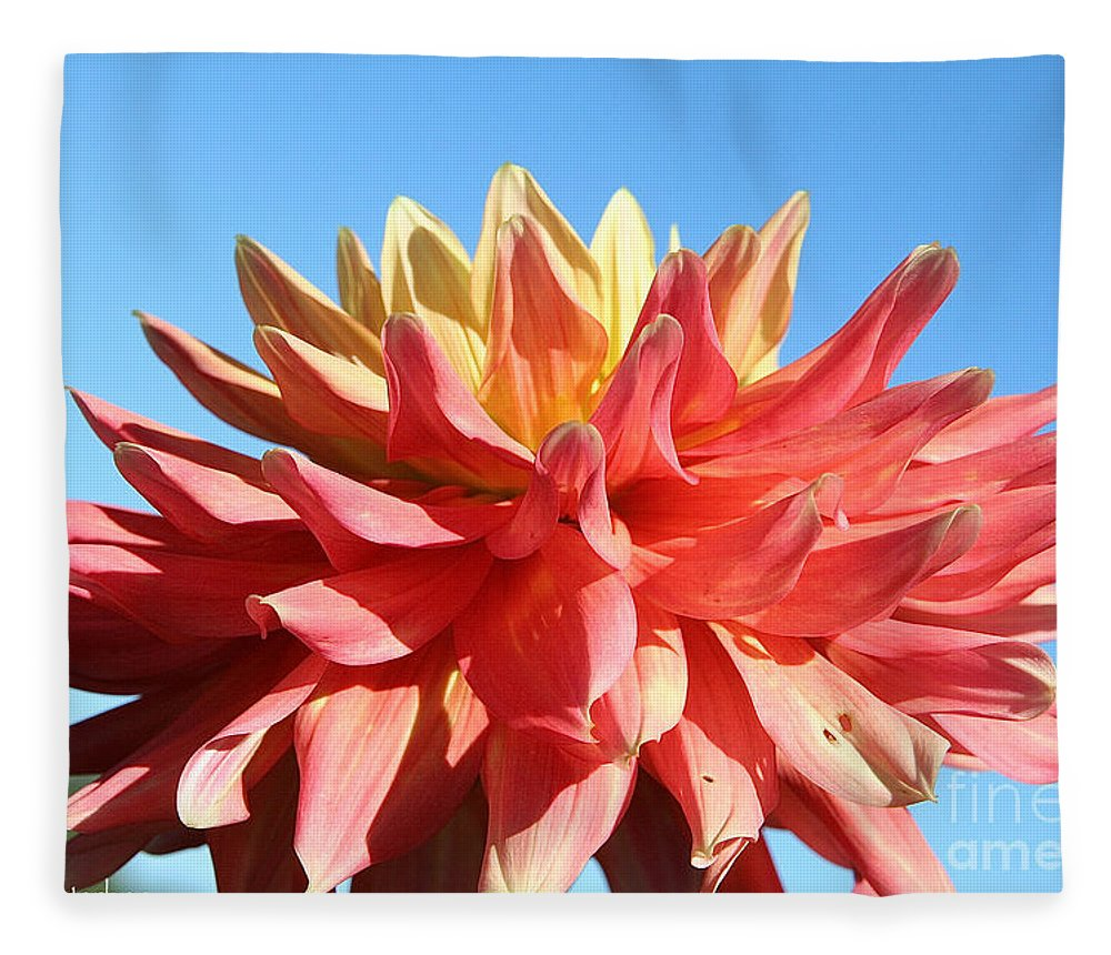 Flower Fleece Blanket featuring the photograph Sunny Center by Susan Herber