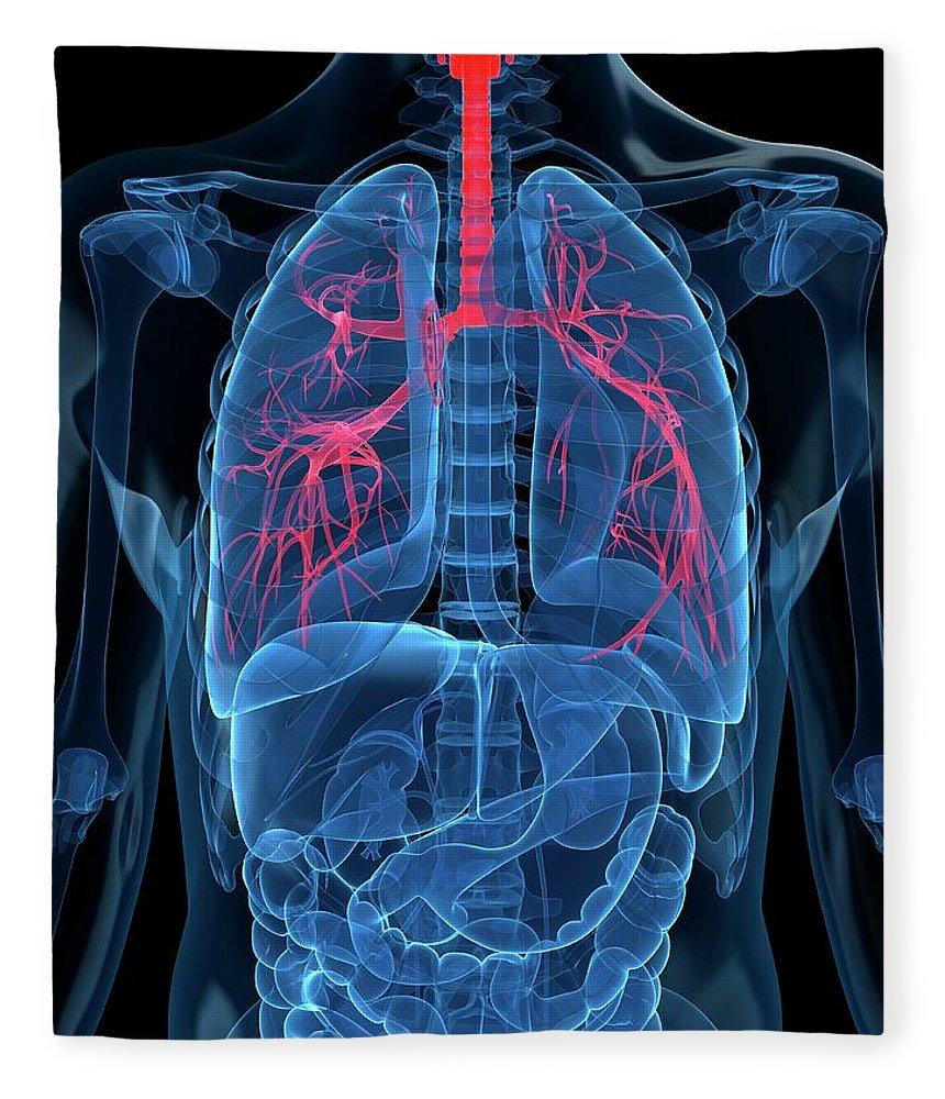 Human Lung Fleece Blanket featuring the digital art Human Lungs, Artwork by Sciepro