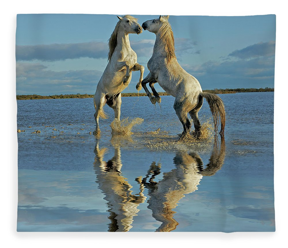 Animals In The Wild Fleece Blanket featuring the photograph Pair Of Camargue Horse Stallions by Adam Jones