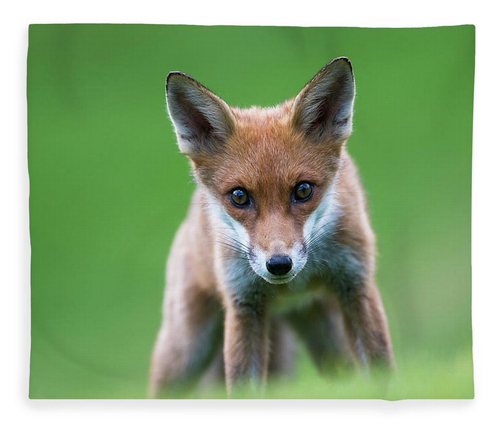 Conspiracy Fleece Blanket featuring the photograph Red Fox Cub Portrait by James Warwick