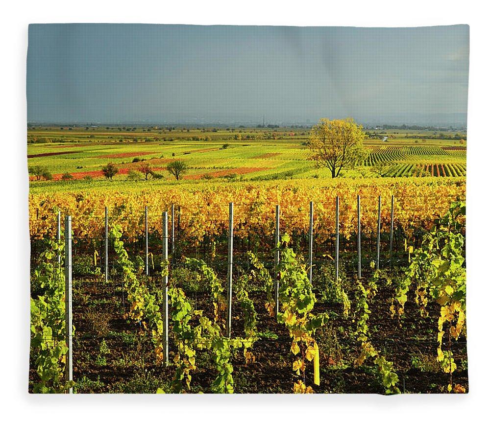 Scenics Fleece Blanket featuring the photograph Vineyard Landscape by Jochen Schlenker
