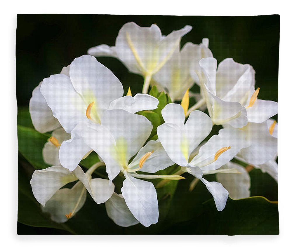 White Ginger Flowers H Coronarium Painted Fleece Blanket For Sale By