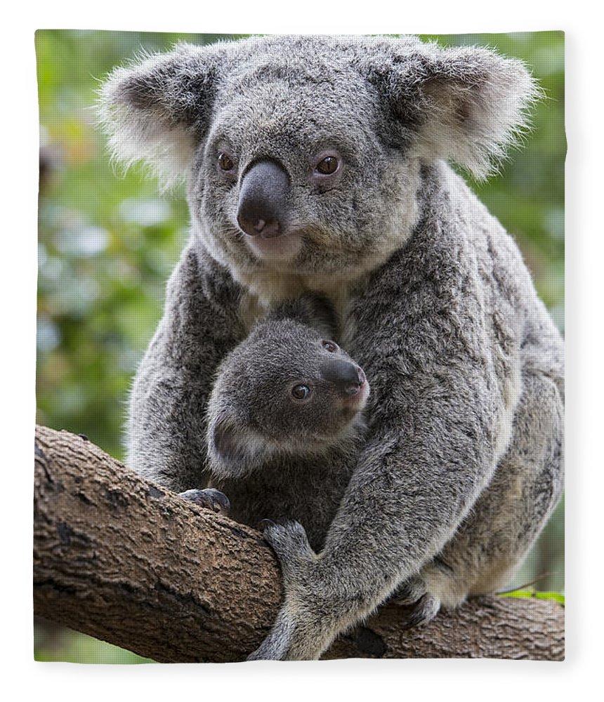 Feb0514 Fleece Blanket featuring the photograph Koala Mother And Joey Australia by Suzi Eszterhas