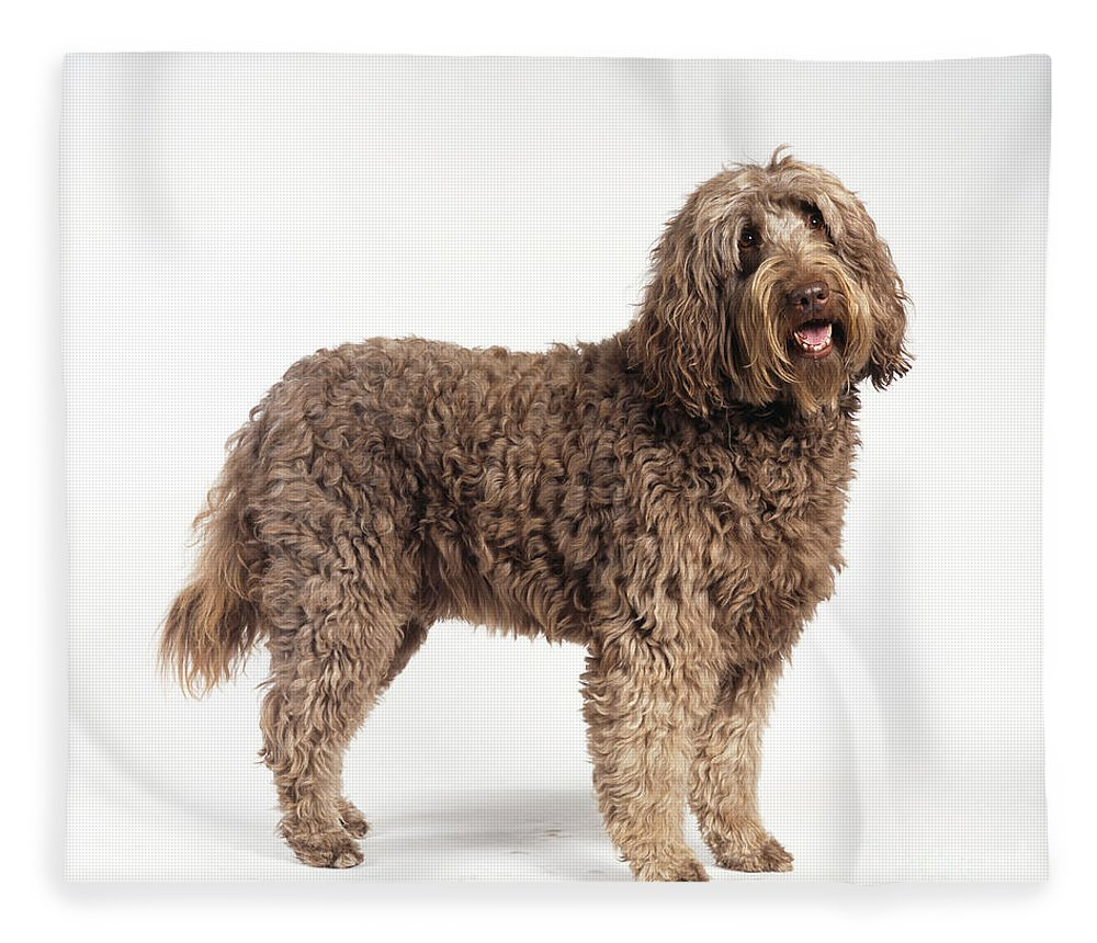 Dog Fleece Blanket featuring the photograph Labradoodle Dog by John Daniels