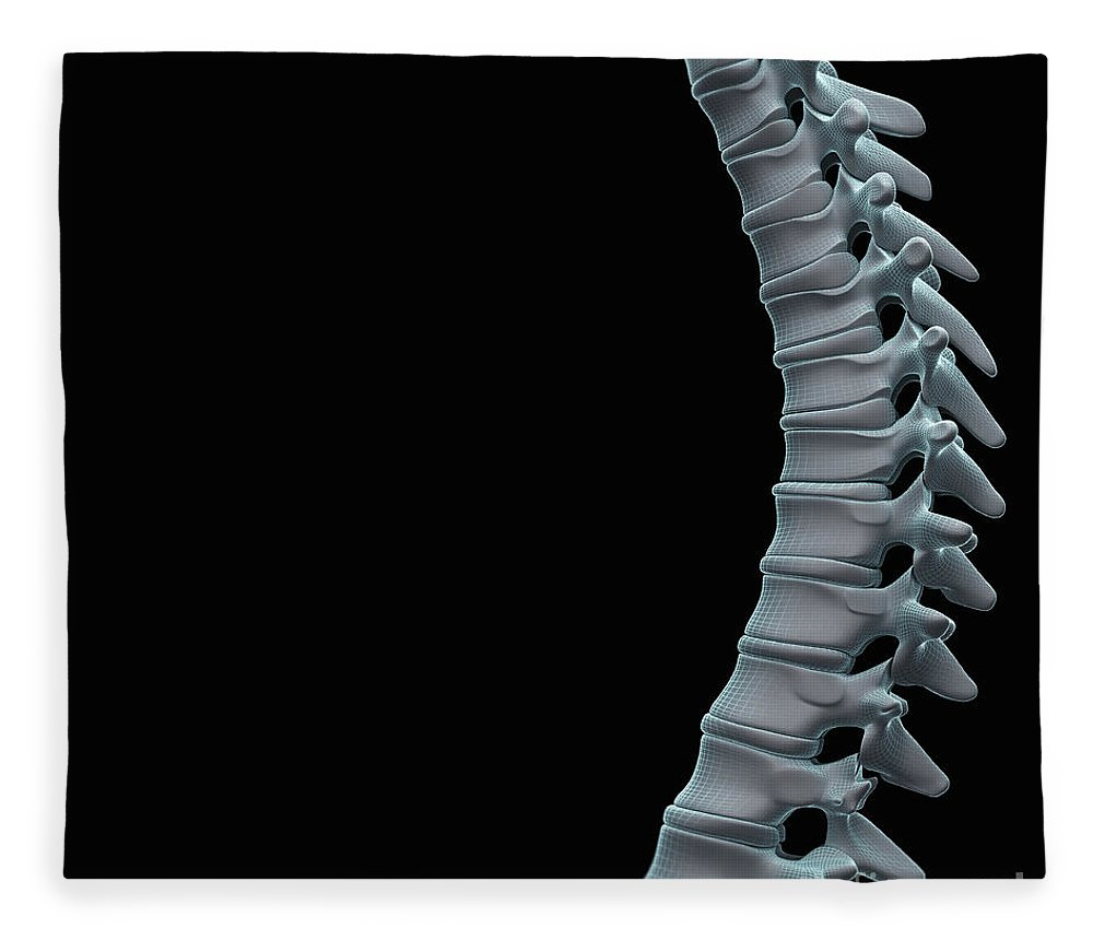 Close-up Fleece Blanket featuring the photograph Spinal Anatomy by Science Picture Co