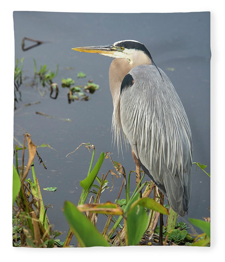 Standing Water Fleece Blanket featuring the photograph Great Blue Heron by Mark Newman