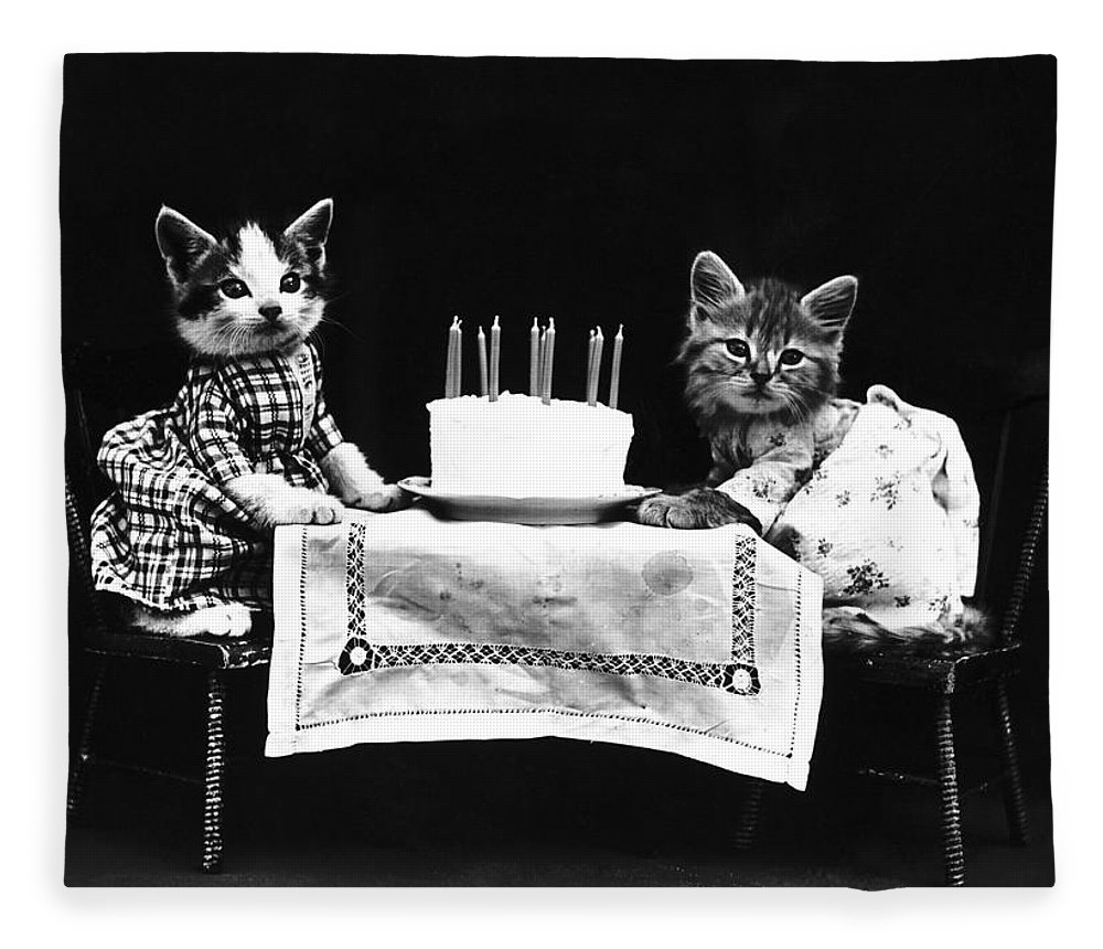 1914 Fleece Blanket featuring the photograph Frees Kittens, C1914 by Granger