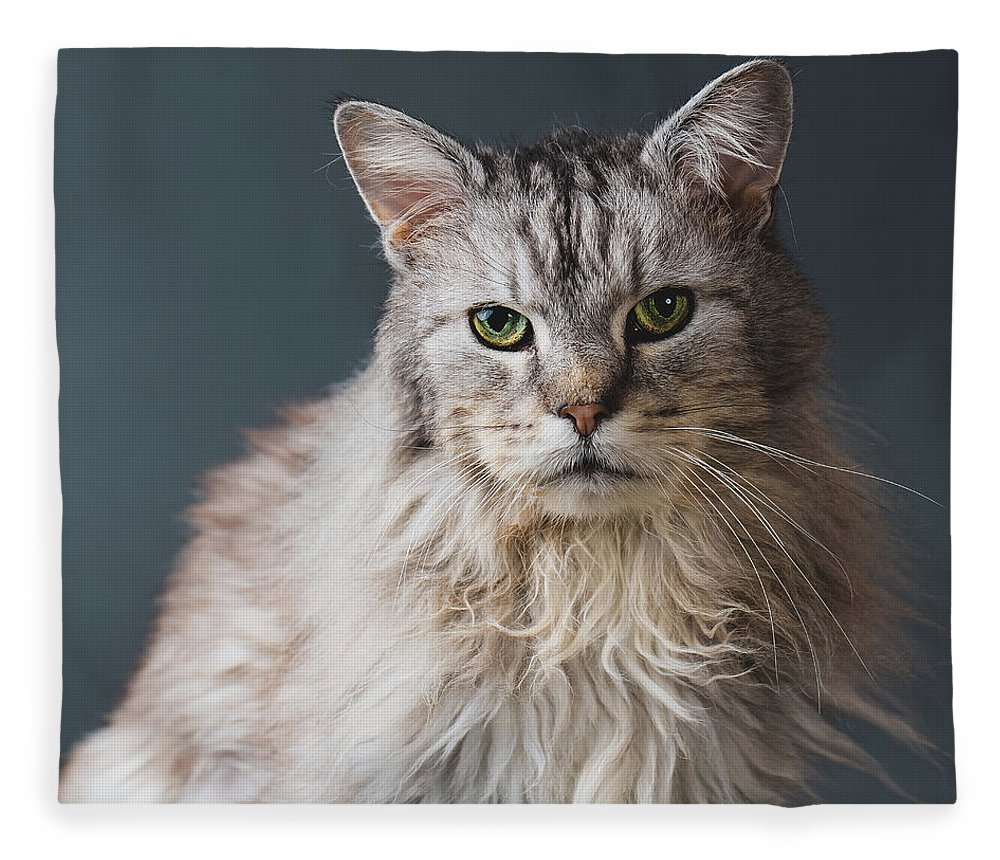 Pets Fleece Blanket featuring the photograph Fortunate Tails by Matt Porteous