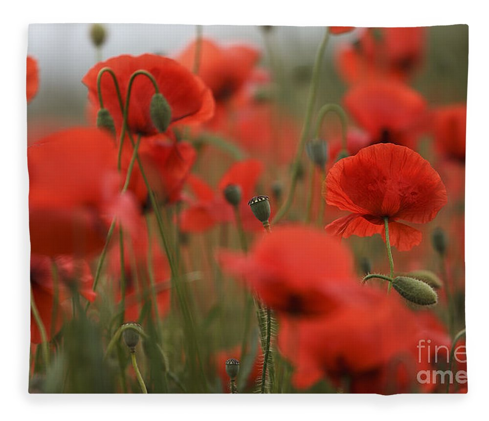 Poppy Fleece Blanket featuring the photograph Red by Nailia Schwarz
