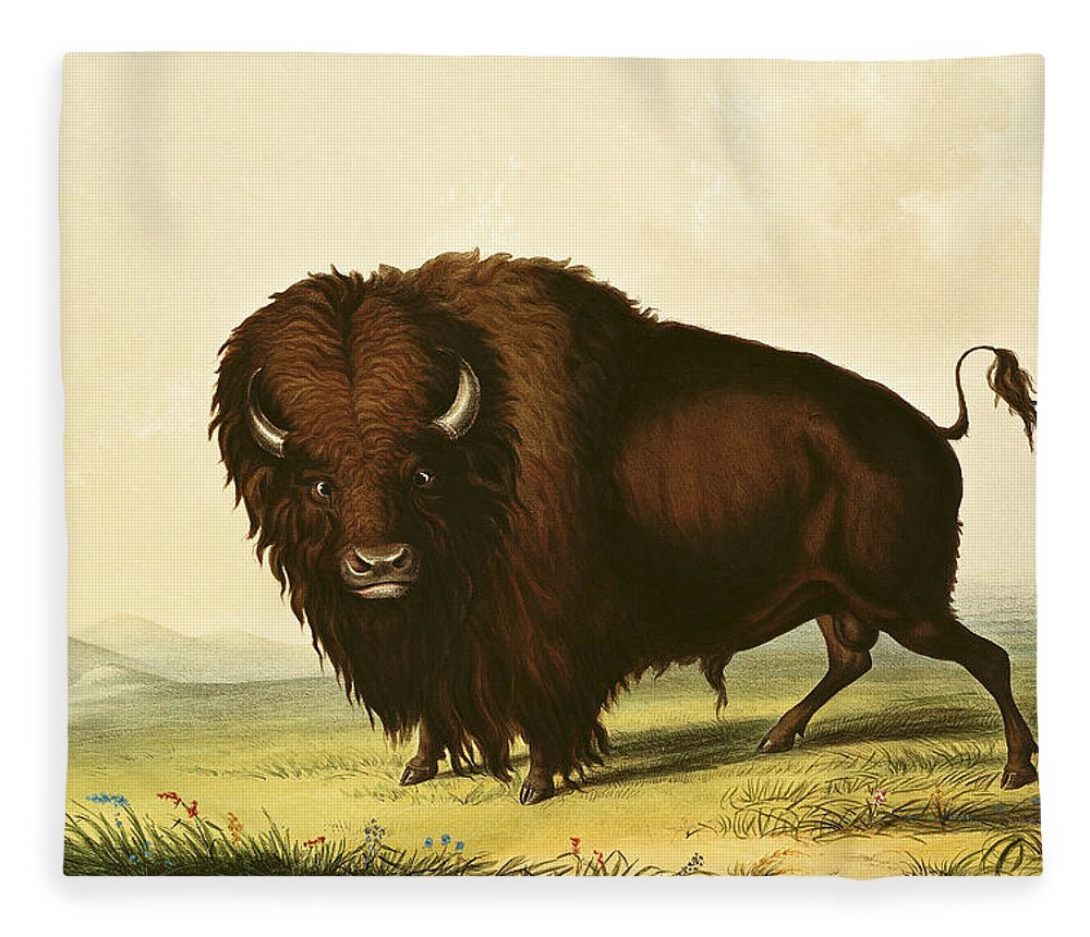 Catlin Fleece Blanket featuring the painting A Bison by George Catlin