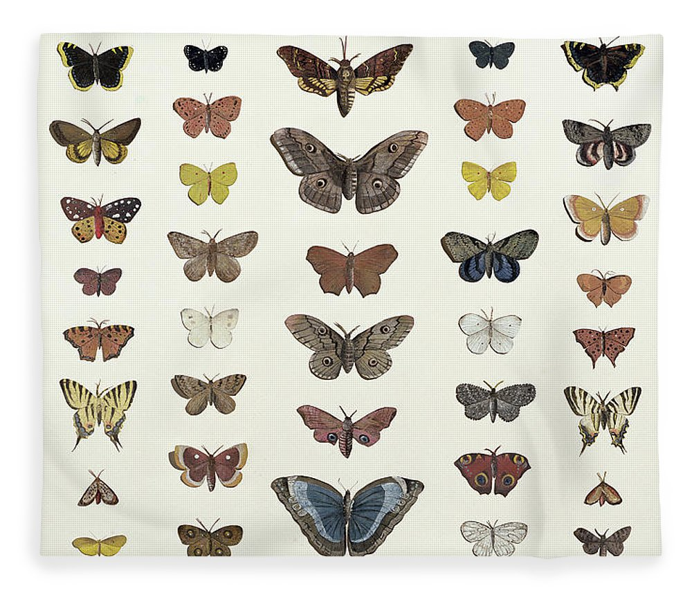 Butterfly; Insect; Moth; Species; Collection; Decoupage; Entomology Fleece Blanket featuring the drawing A Collage Of Butterflies And Moths by French School