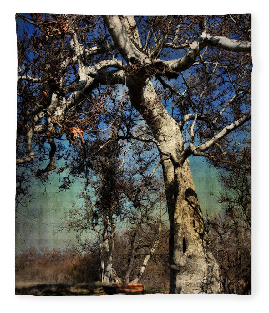 Sycamore Grove Park Fleece Blanket featuring the photograph A Day Like This by Laurie Search