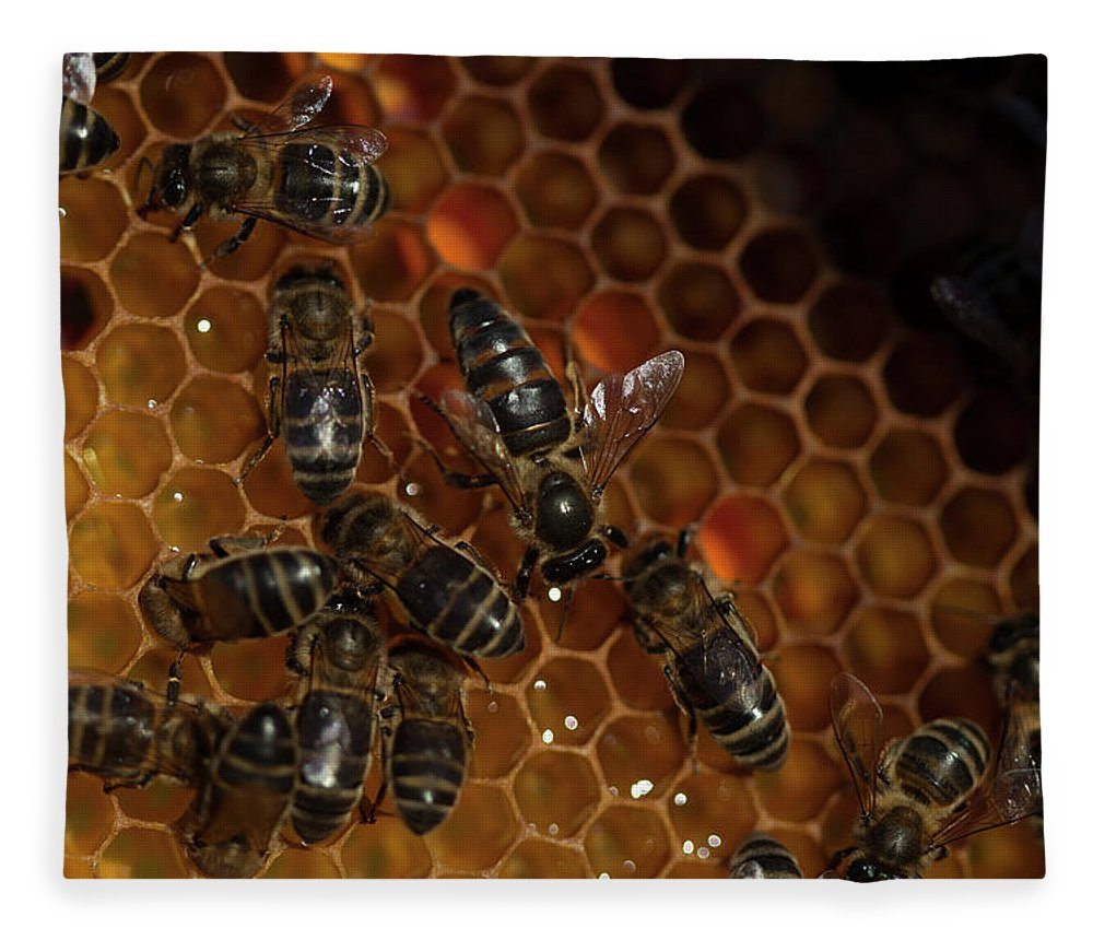 Worker Bees Fleece Blanket featuring the photograph A Queen Bee Walks In The Center by Chico Sanchez