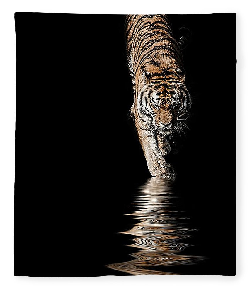 Tiger Fleece Blanket featuring the photograph A Time To Reflect by Paul Neville