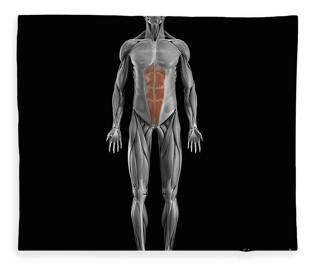 Full View Fleece Blanket featuring the photograph Abdominal Muscles by Science Picture Co