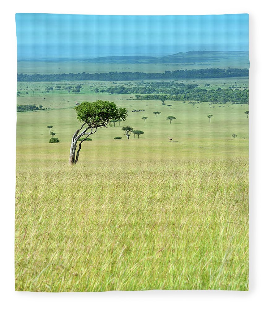 Scenics Fleece Blanket featuring the photograph Acacia In The Green Plains Of Masai Mara by Guenterguni