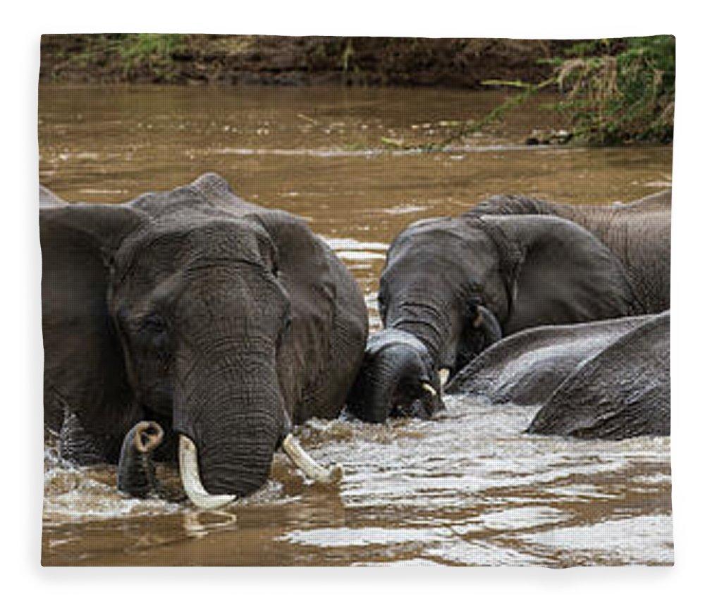 Kenya Fleece Blanket featuring the photograph African Elephants Having A Bath In Mara by Manoj Shah