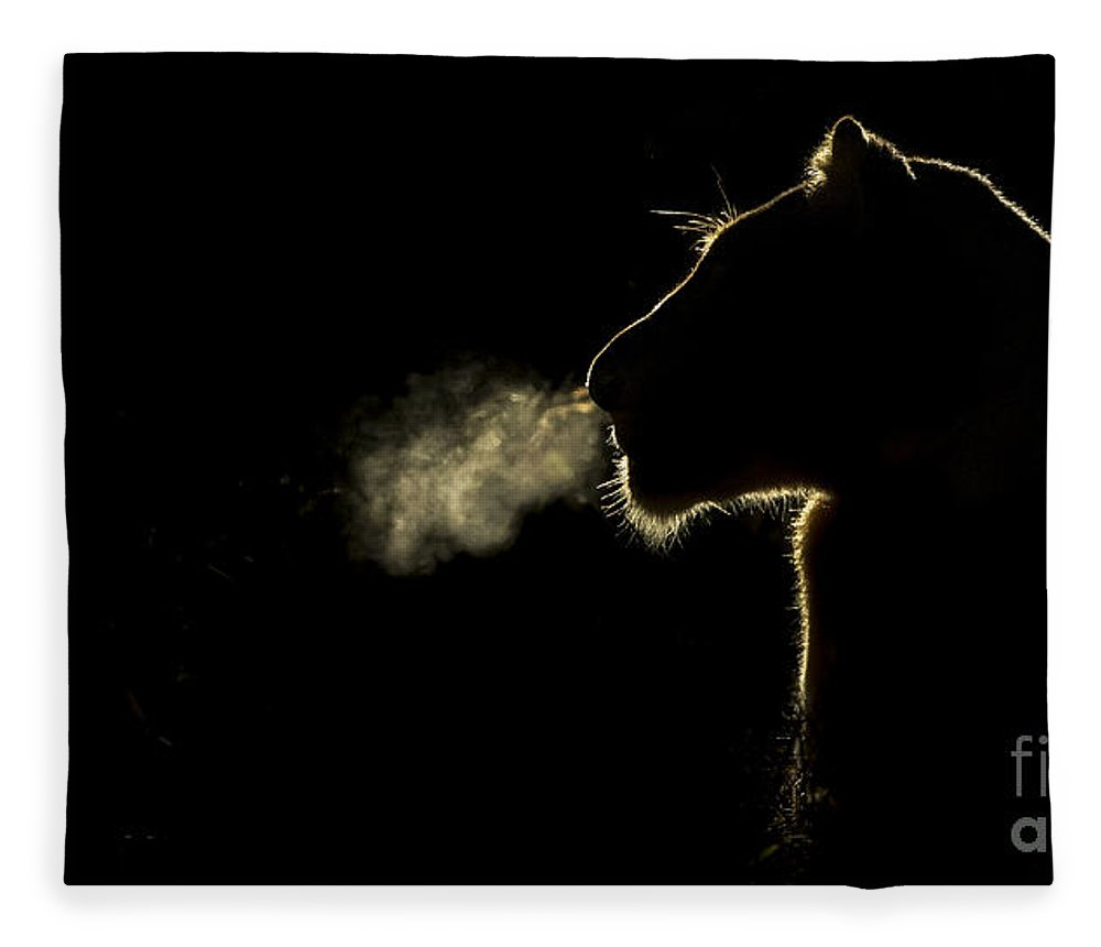 Nis Fleece Blanket featuring the photograph African Lioness Breath Sabi Sands South by Brendon Cremer