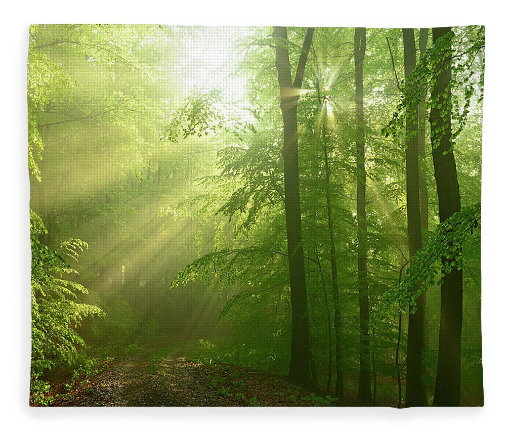 Beech Tree Fleece Blanket featuring the photograph After The Rain - Sunbeams In Damp Beech by Avtg