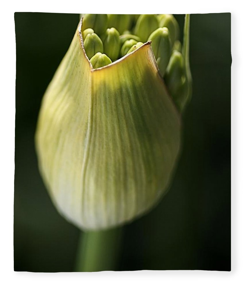 Flower Fleece Blanket featuring the photograph Agapanthus In The Daylight by Joy Watson