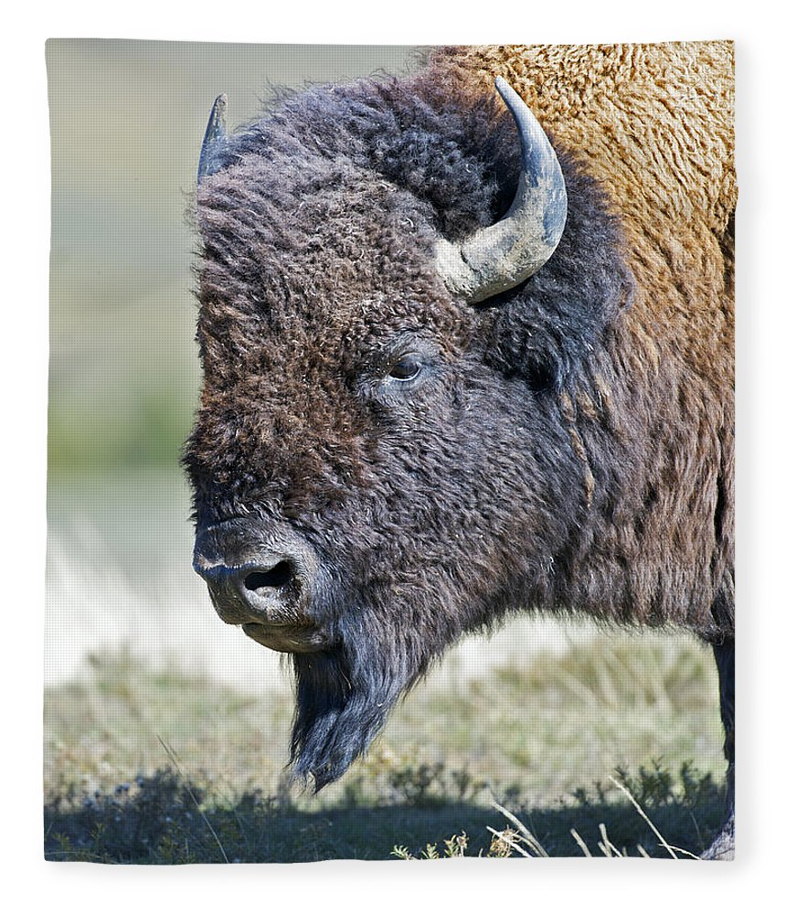 American Fleece Blanket featuring the photograph American Bison Closeup by Gary Langley