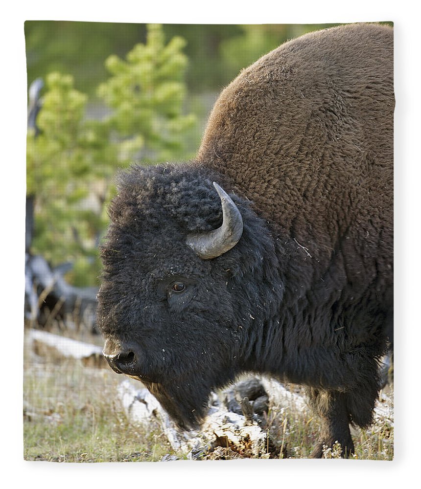 American Fleece Blanket featuring the photograph American Bison by Gary Langley