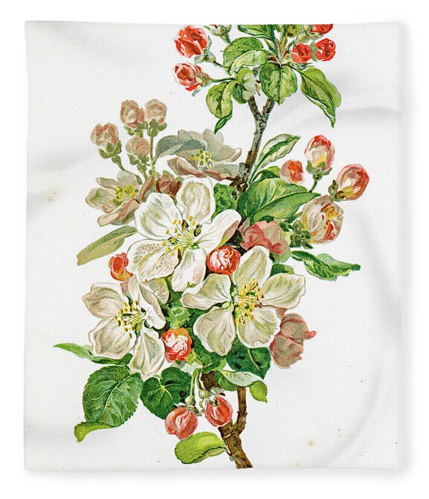 Cherry Fleece Blanket featuring the digital art Apple Blossom 19 Century Illustration by Mashuk