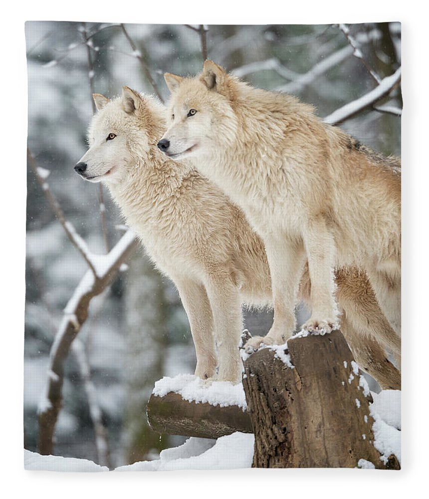 Snow Fleece Blanket featuring the photograph Arctic Wolves Pack In Wildlife, Winter by 4fr