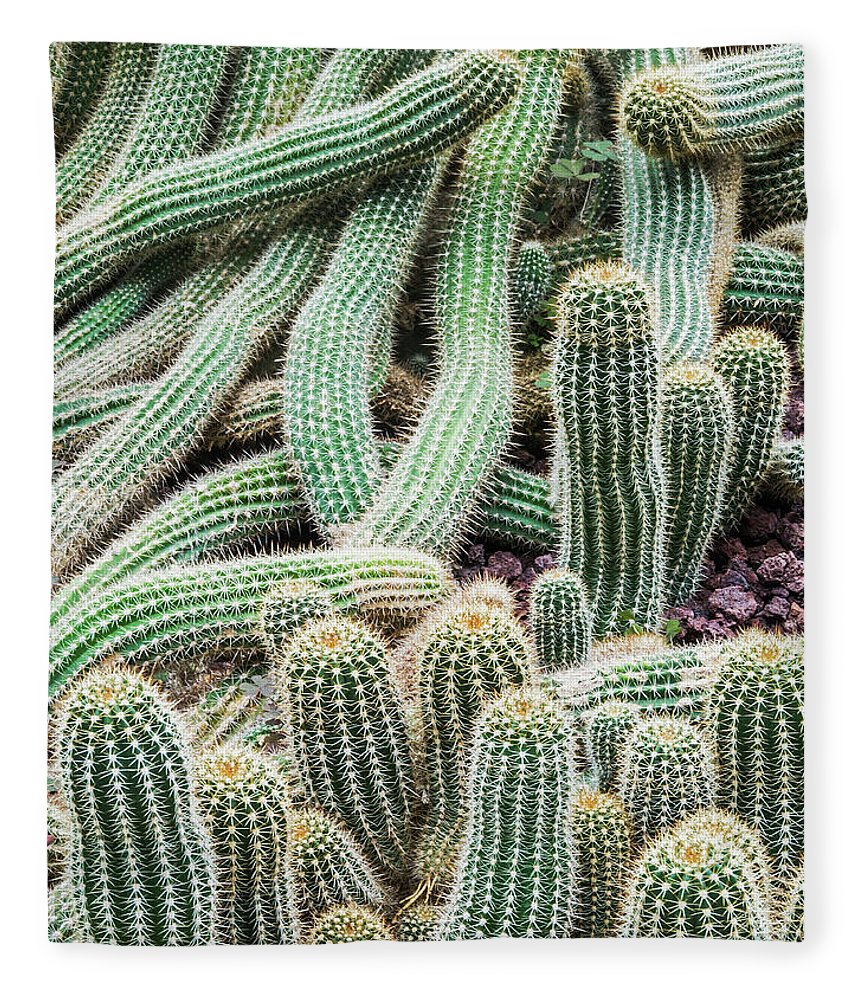 Heap Fleece Blanket featuring the photograph Argentine Giant Cactus by Andy Sotiriou