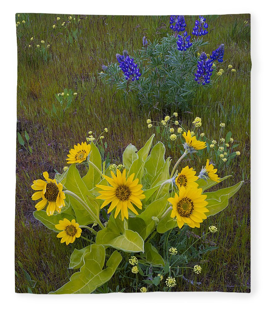 Nature Fleece Blanket featuring the photograph Arrowleaf Balsamroot And Lupine by John Shaw
