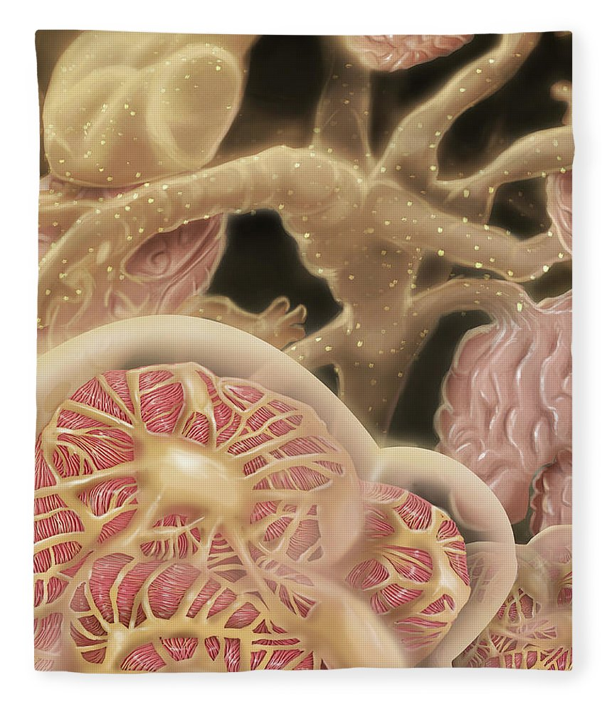 Nephron Fleece Blanket featuring the digital art Artist Depcition Of Glomerulus by Alan Gesek/stocktrek Images
