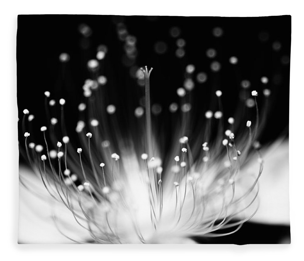 Black Background Fleece Blanket featuring the photograph As Flame by Char