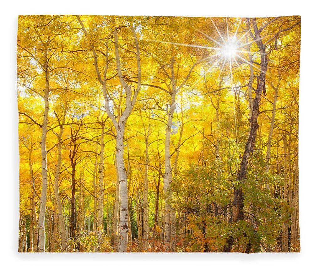 Aspens Fleece Blanket featuring the photograph Aspen Morning by Darren White