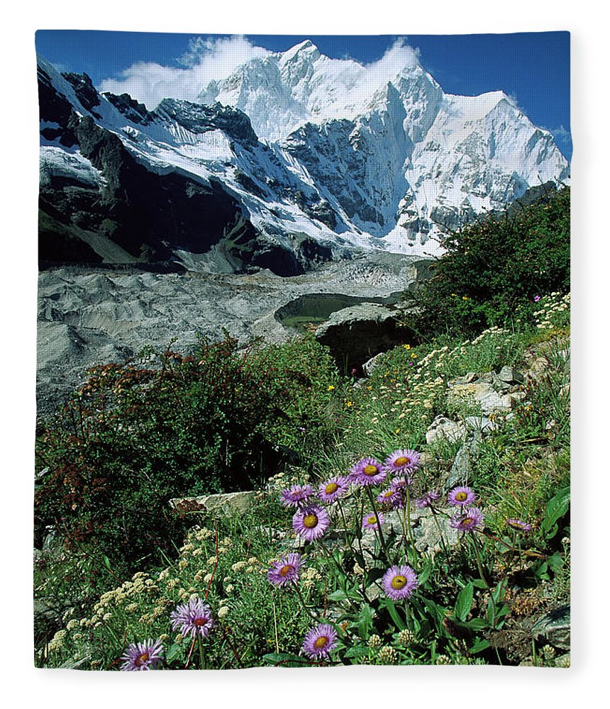 00260106 Fleece Blanket featuring the photograph Aster Daisies at Mt. Chomolonzo by Colin Monteath