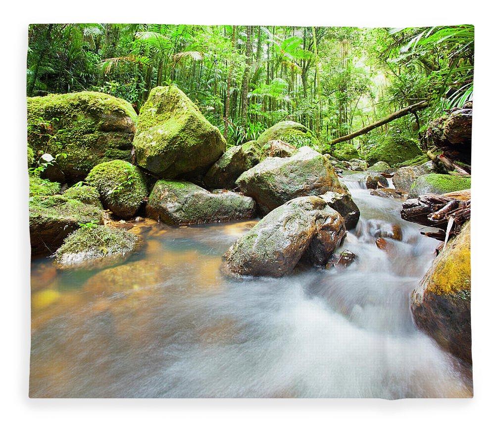 Cool Attitude Fleece Blanket featuring the photograph Australian Rainforest by Mburt