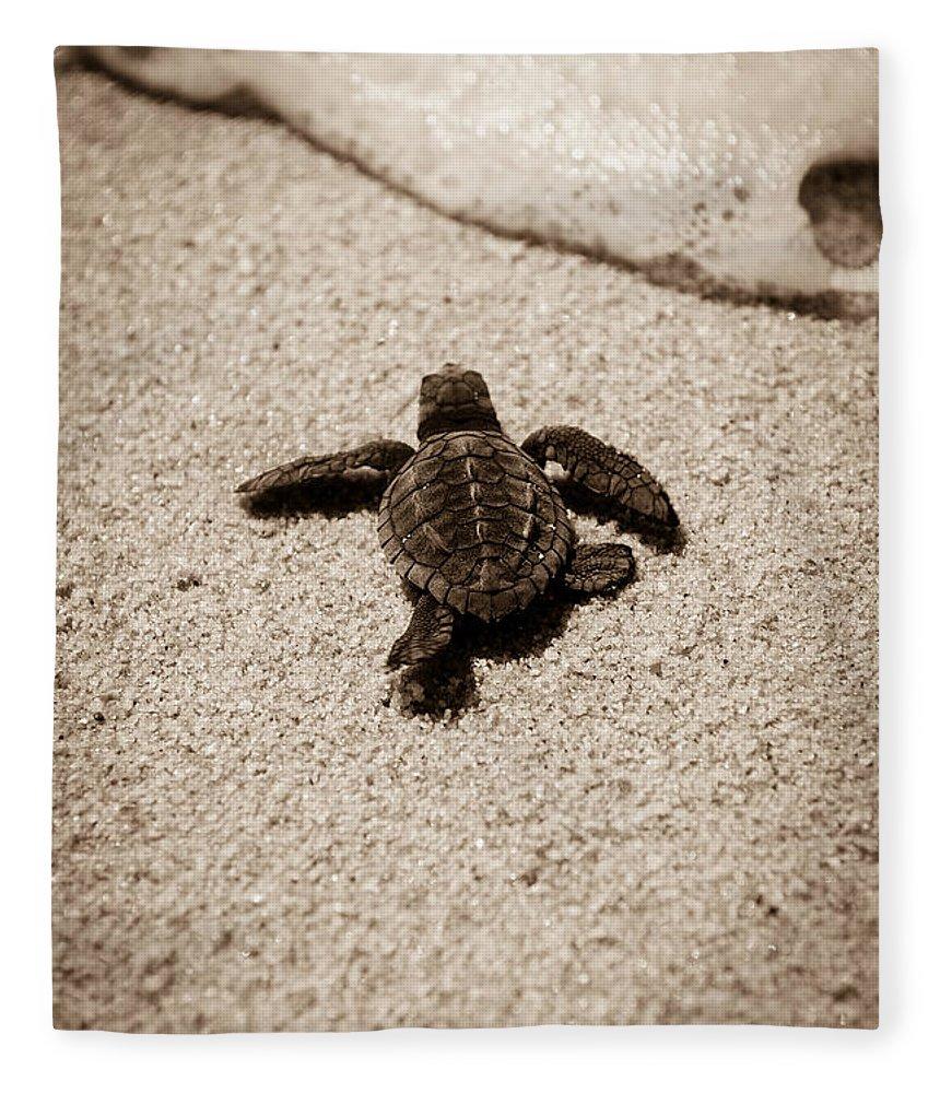 Baby Loggerhead Fleece Blanket featuring the photograph Baby Sea Turtle by Sebastian Musial