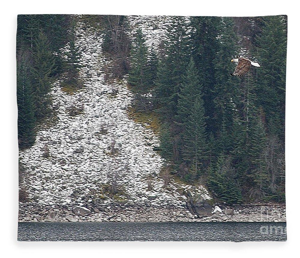 Bald Eagle Fleece Blanket featuring the photograph Bald Eagle V by Sharon Elliott