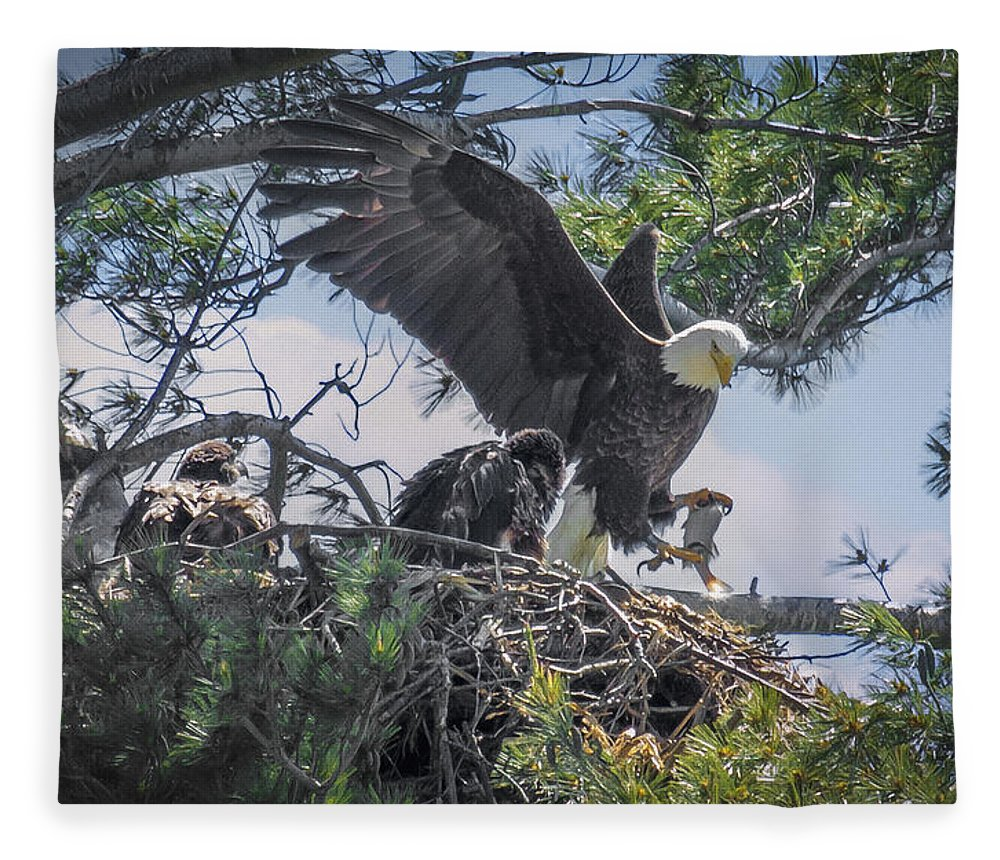 Bald Eagle Fleece Blanket featuring the photograph Bald Eagle With Eaglets And Fish by Everet Regal