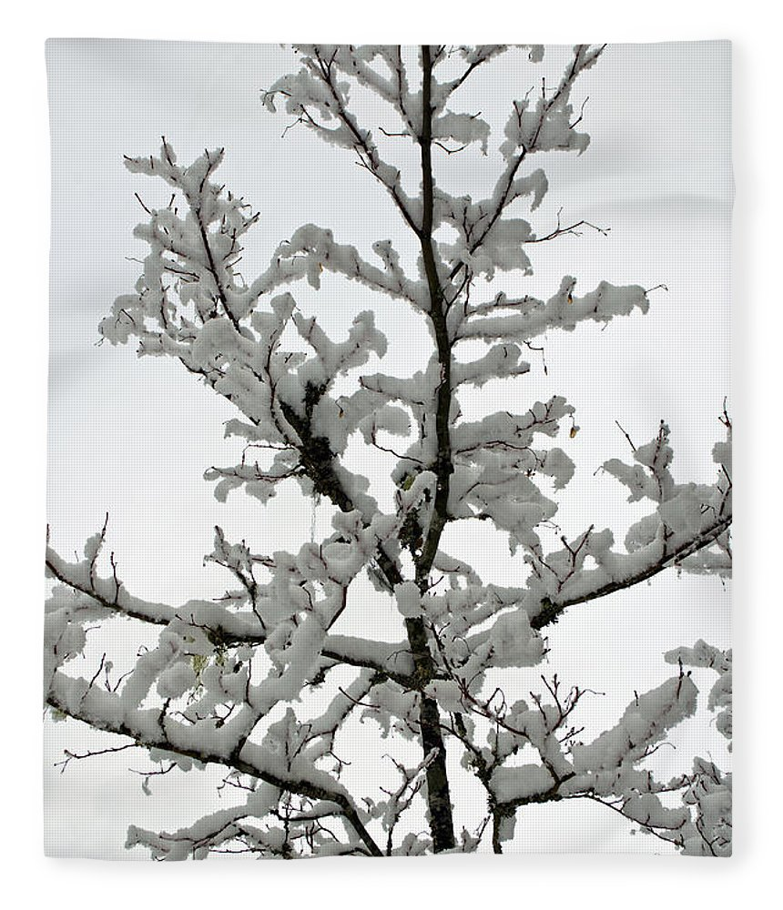 Bare Branches Fleece Blanket featuring the photograph Bare Branches With Snow by Tikvah's Hope