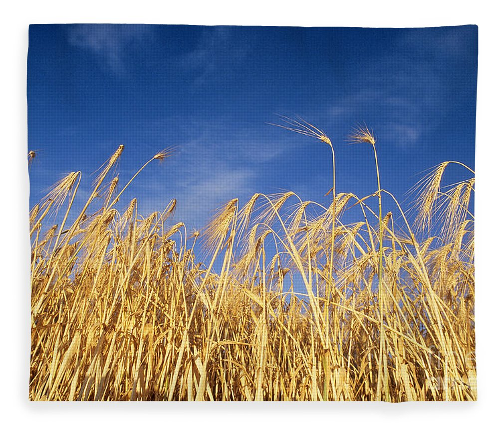 Barley Fleece Blanket featuring the photograph Barley In Idaho by William H. Mullins